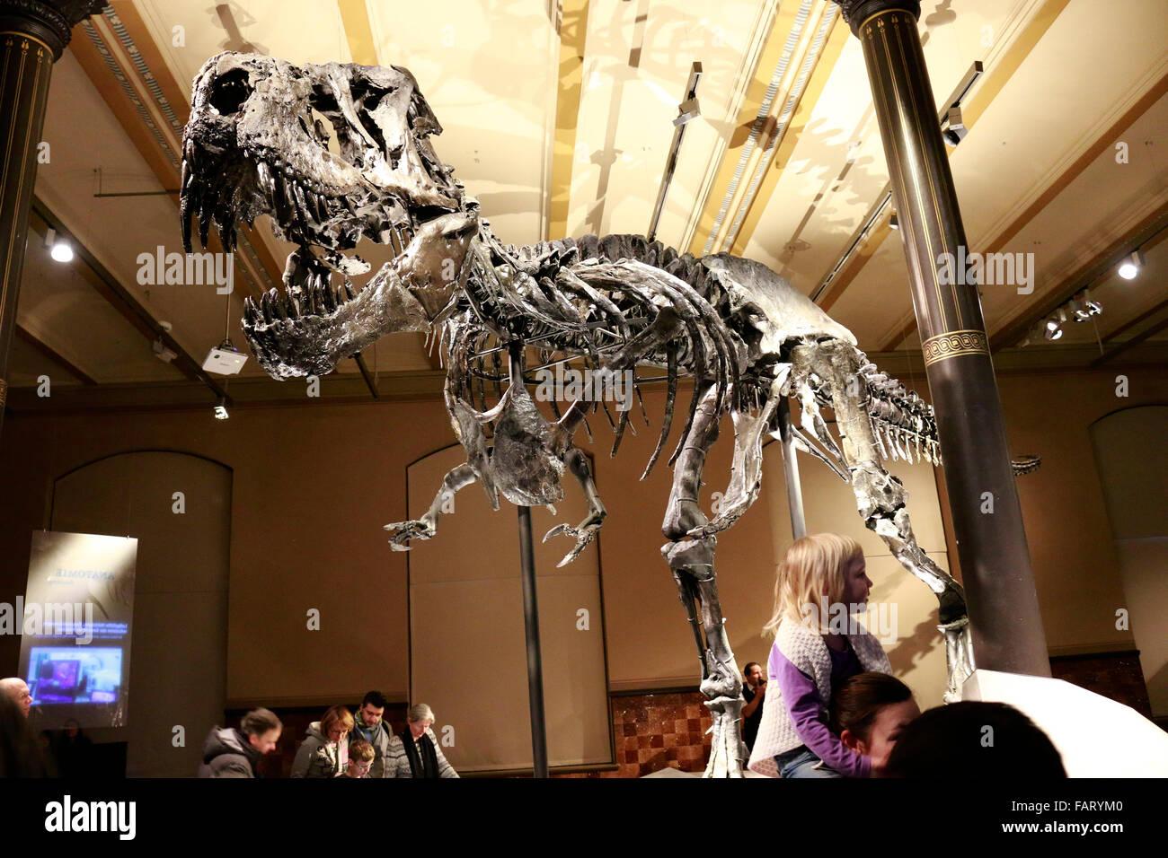 das Skelett des Tyrannus Saurus Rex 'Tristan Otto', Naturhistorisches Museum, Berlin. - Stock Image