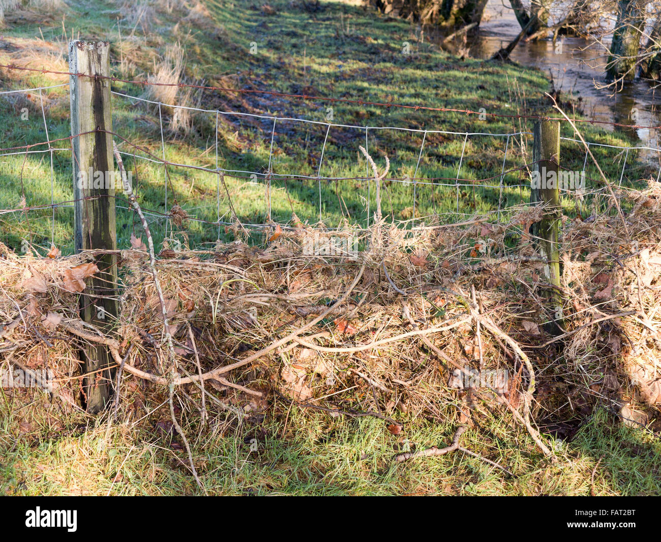 A post and wire stockproof fence containing flood debris on river bank - Stock Image