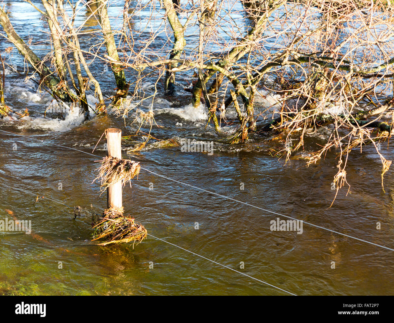Partly submerged fire fence and bushes containing flood debris - Stock Image