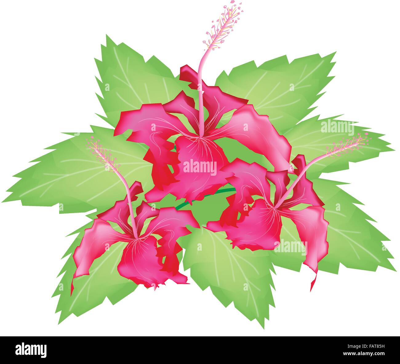 Beautiful flower an illustration group of fresh red hibiscus beautiful flower an illustration group of fresh red hibiscus flowers or bunga raya on green leaves isolated on a white backgrou izmirmasajfo