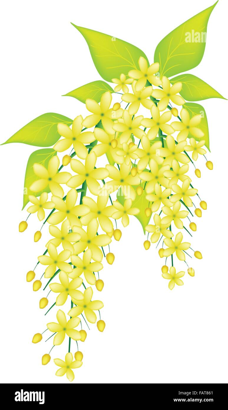 Beautiful Flower An Illustration Yellow Color Of Cassia Fistula Or