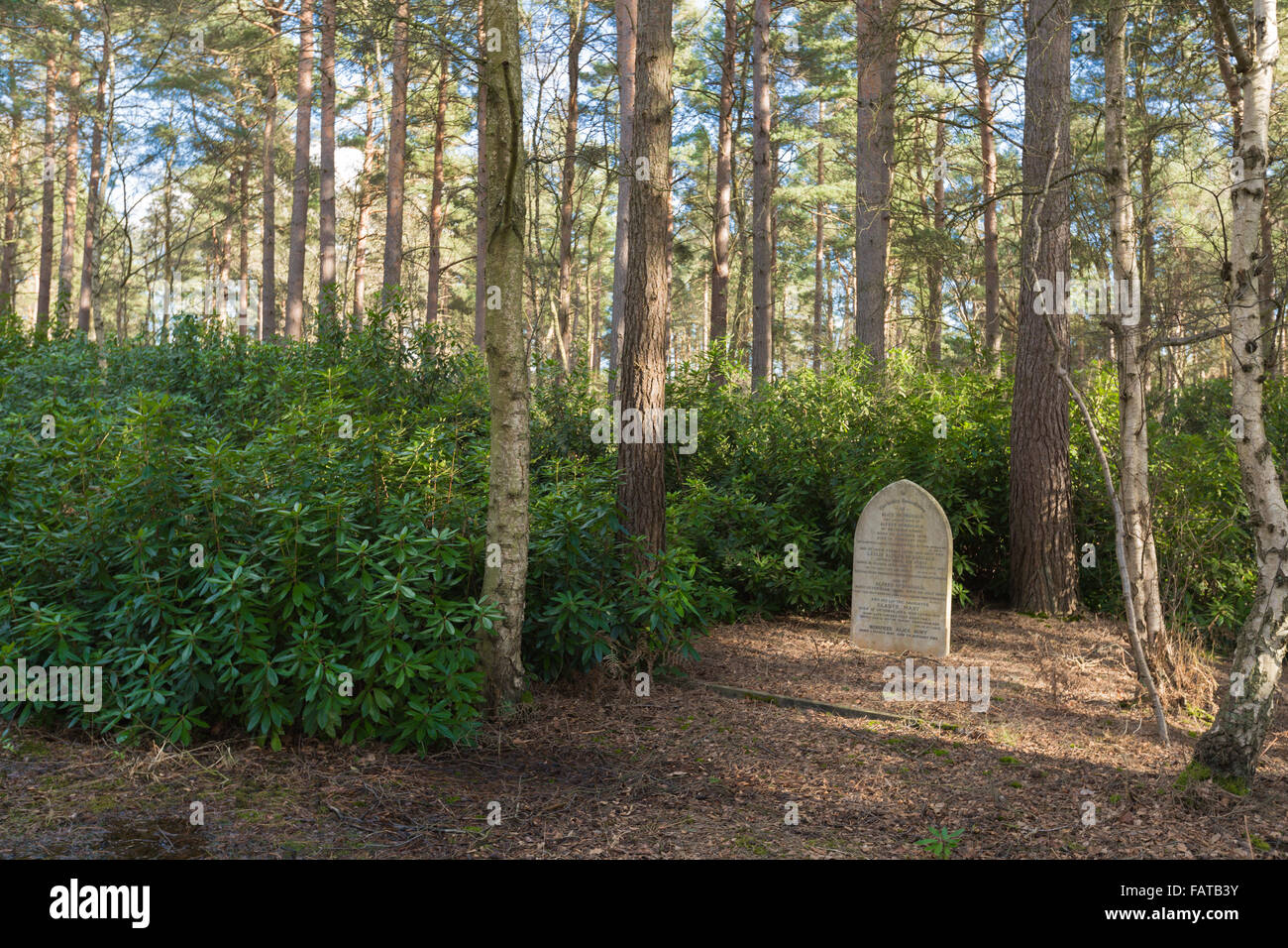 The Graveyard In The Woods