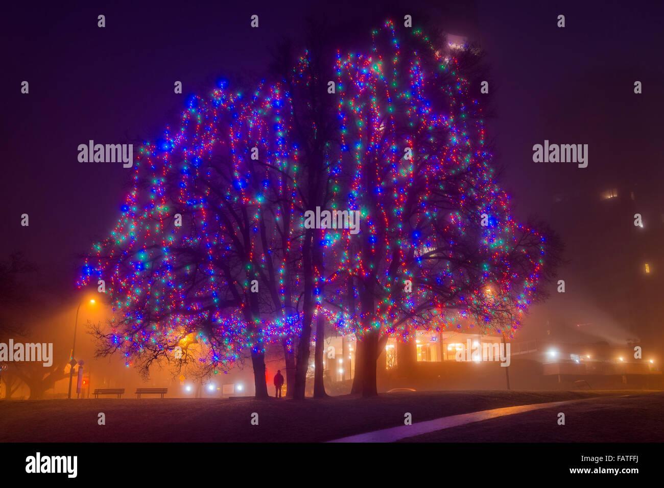 Vancouver Christmas Lights.Christmas Lights At Elm Grove English Bay Vancouver
