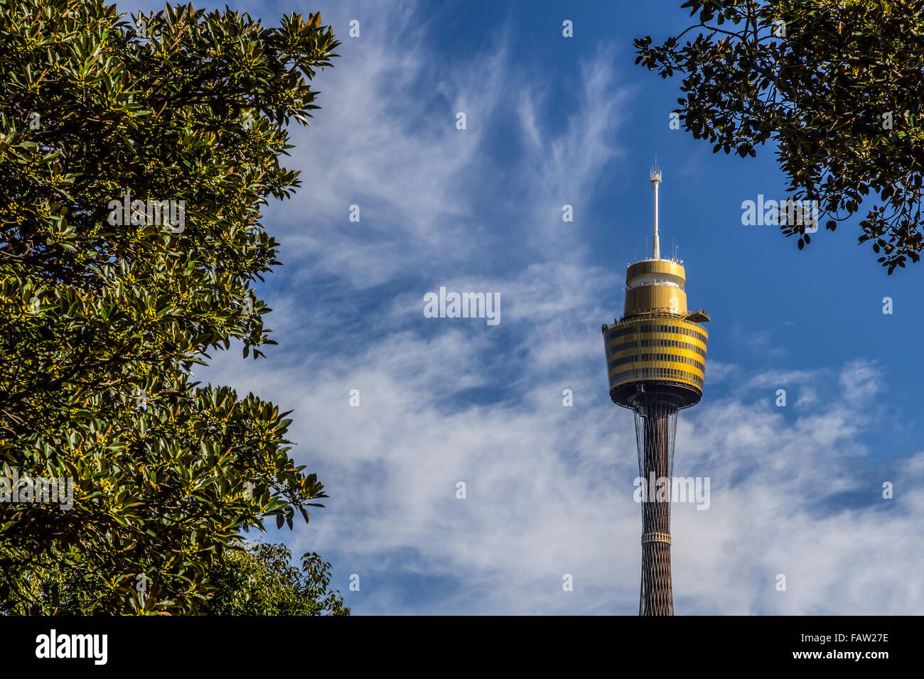 Sydney tower view from park - Stock Image