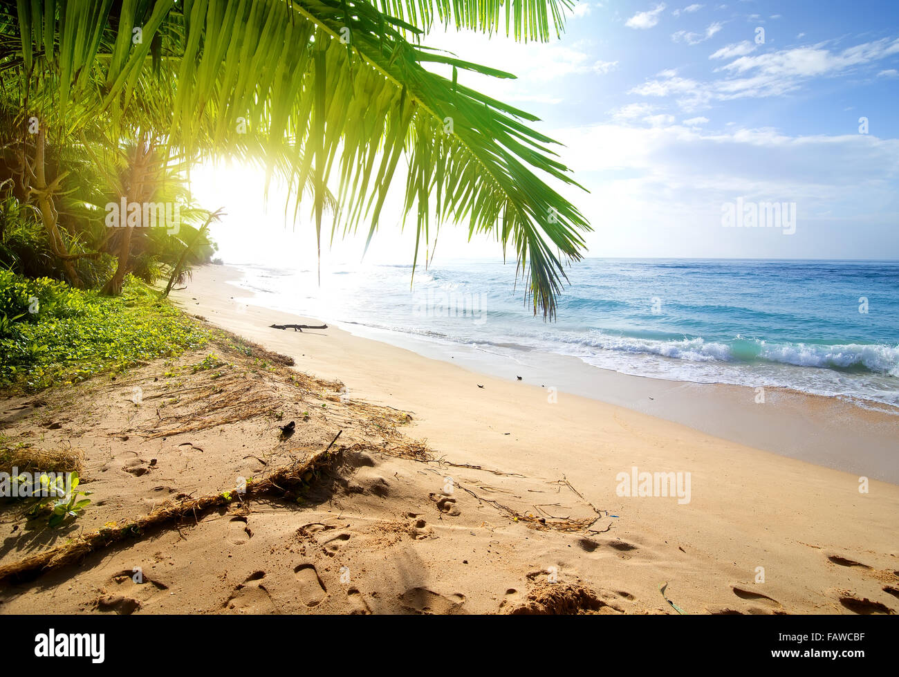 Sandy beach with green palm trees near ocean - Stock Image