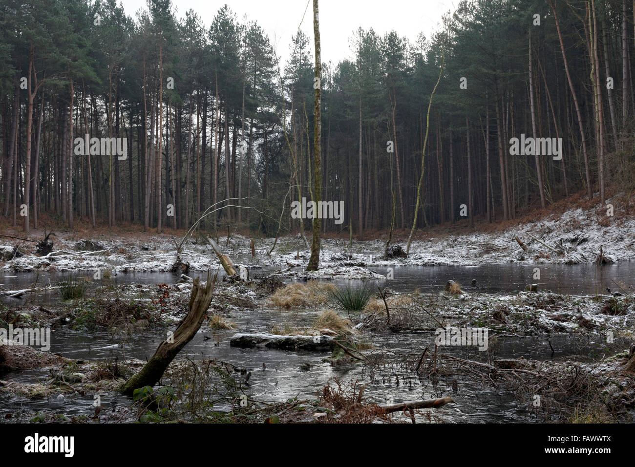 Mere at Delamere Forest, Cheshire, United Kingdom - Stock Image