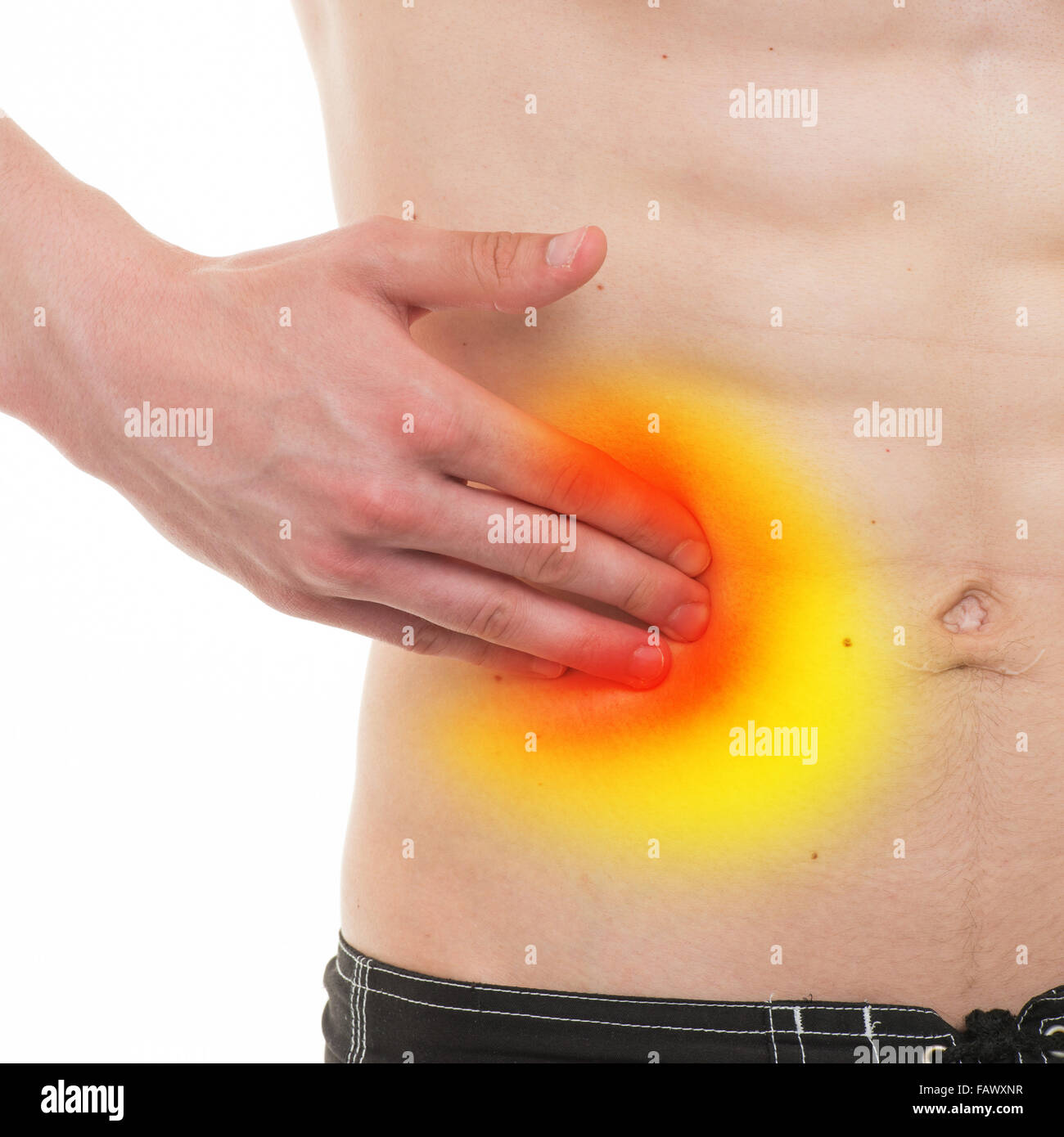Abdominal Organs Stock Photos & Abdominal Organs Stock Images - Alamy