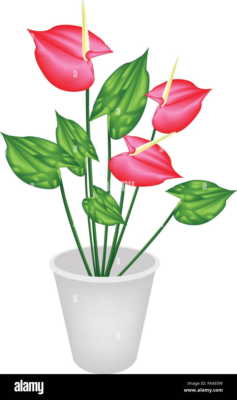 Beautiful Flower, An Illustration Heart Shaped Spathe of Blooming Red Anthurium Flowers or Flamingo Flower in Flowerpot - Stock Vector