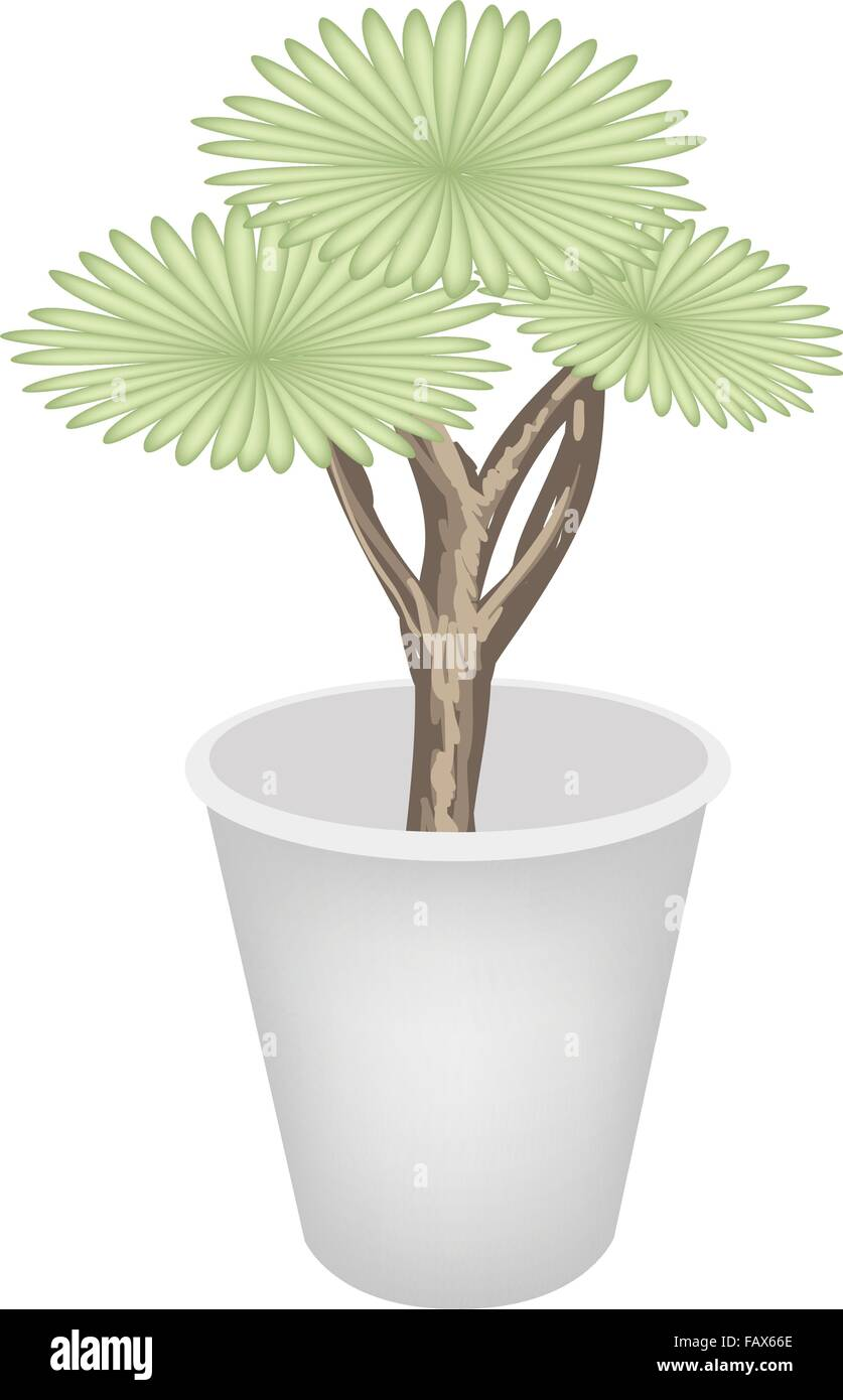 Ecological Concept, An Illustration Green Tree and Plant of Dragon Tree in Flowerpot for Garden Decoration. - Stock Vector