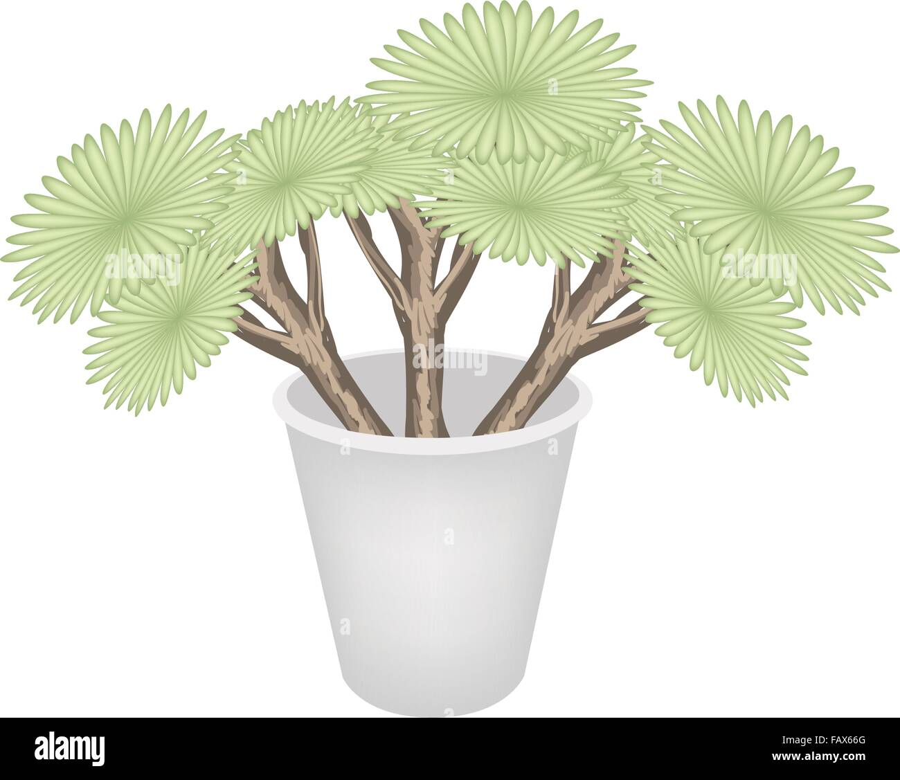 Ecological Concept, An Illustration Green Trees and Plants of Dragon Trees in Flowerpot for Garden Decoration. - Stock Vector