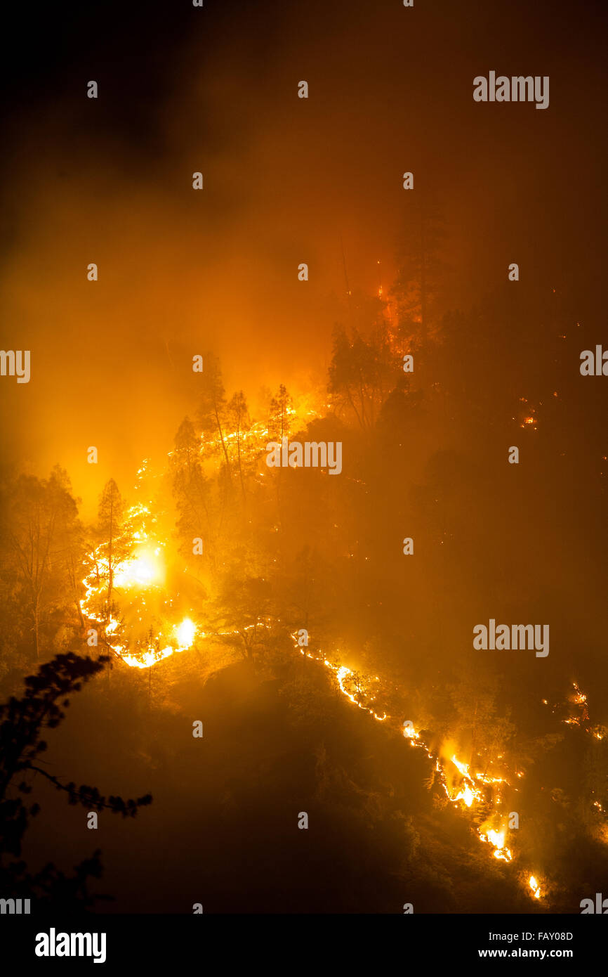 Forest fire at night, Lime Complex fire, Trinity Mountains, Northern California - Stock Image