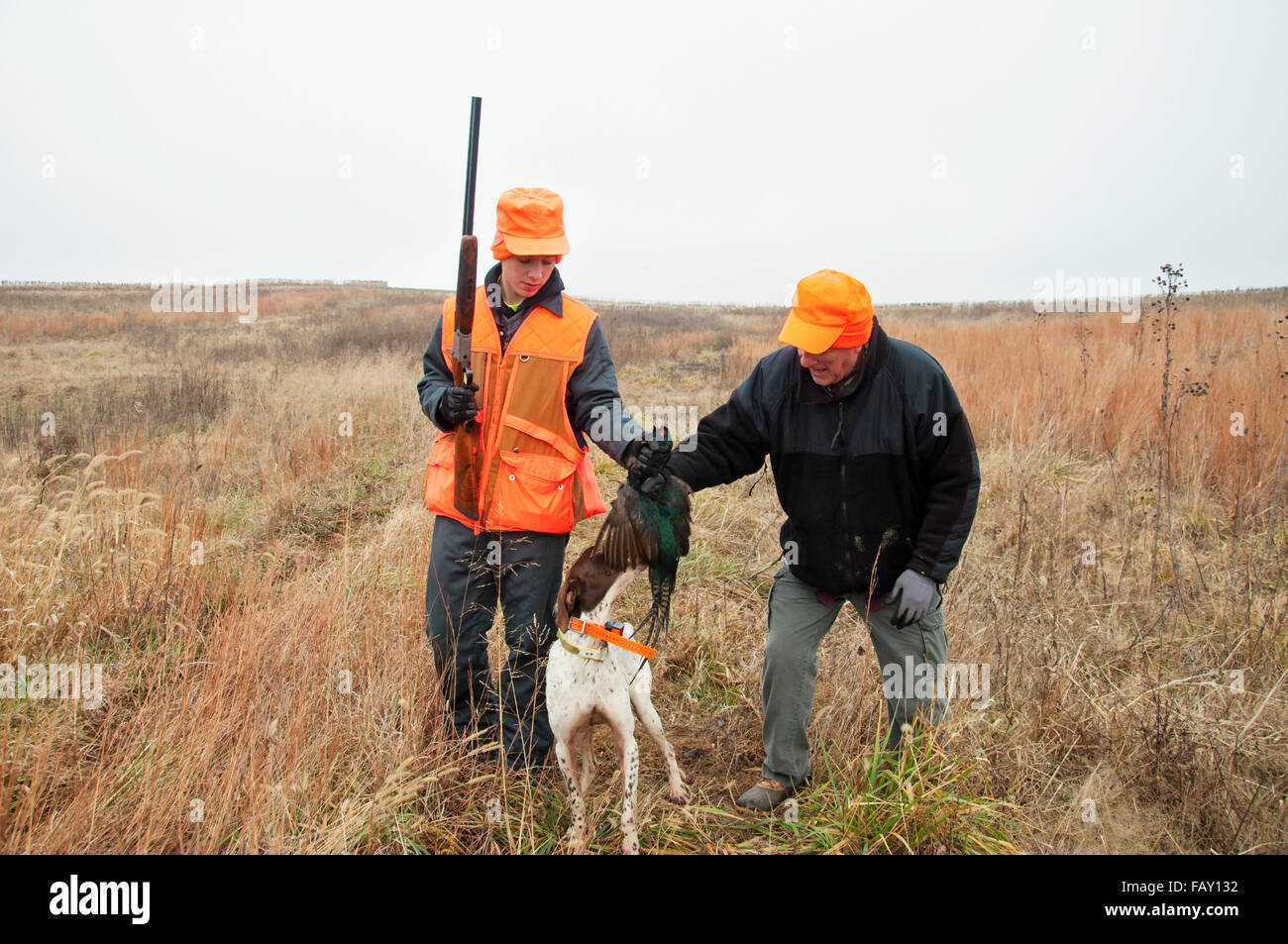 Man and boy grab pheasant from trained hunting bird dog - Stock Image