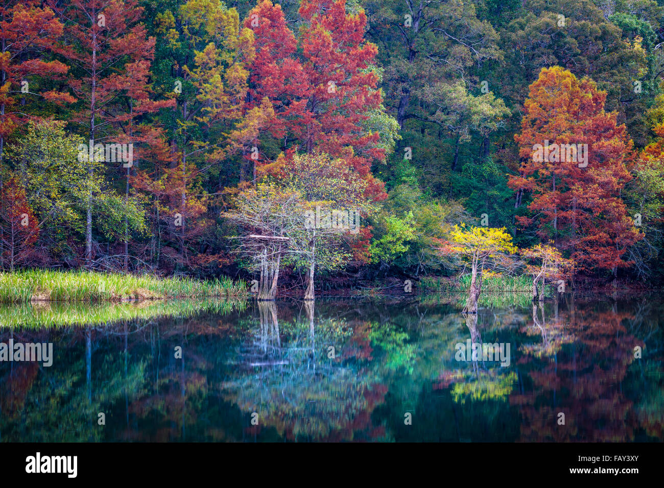 Beavers Bend State Park is a 1,300 acres state park located near Broken Bow, Oklahoma - Stock Image