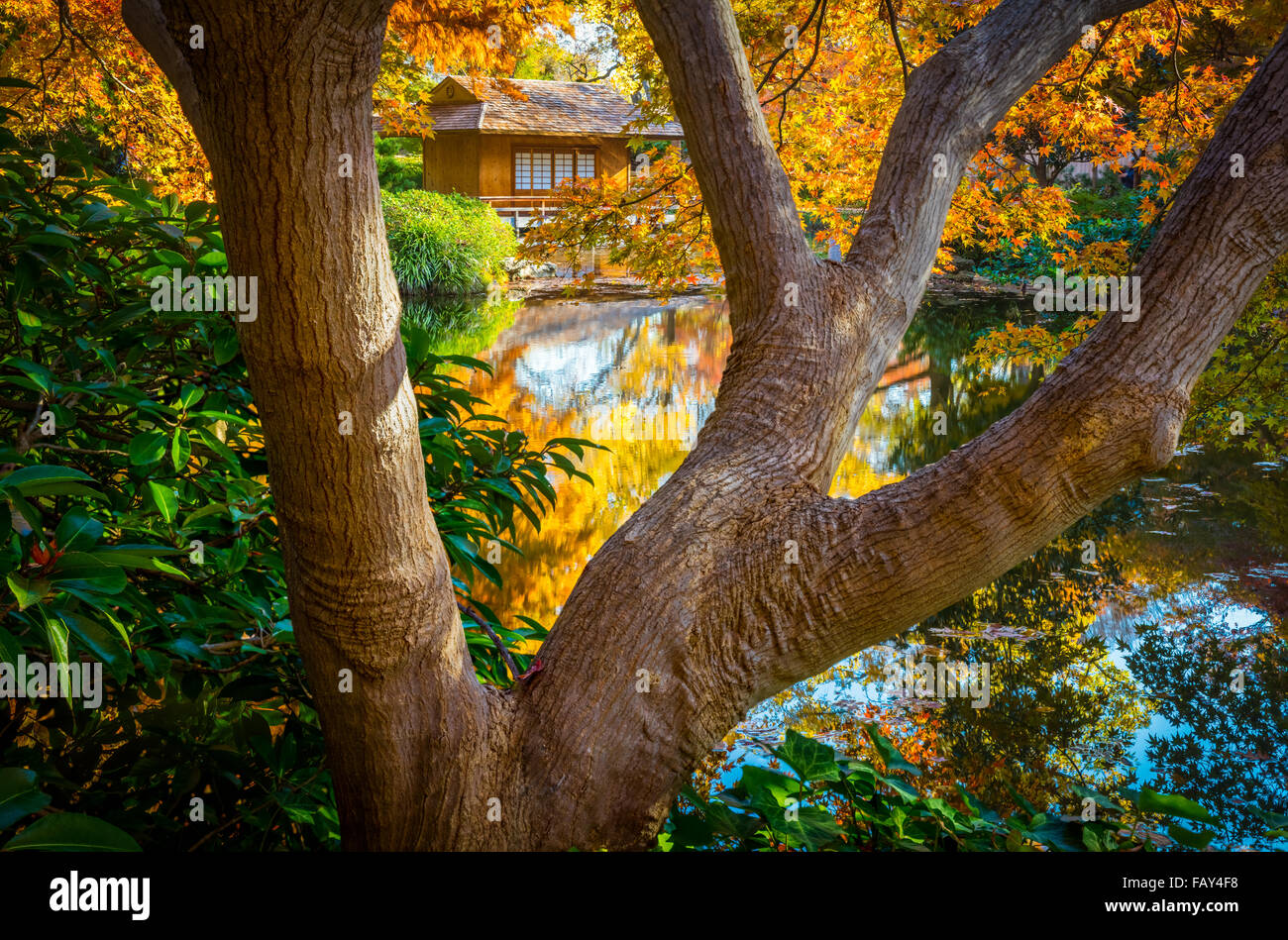 The Fort Worth Japanese Garden is a 7.5-acre Japanese Garden in the Fort Worth (Texas) Botanic Garden - Stock Image