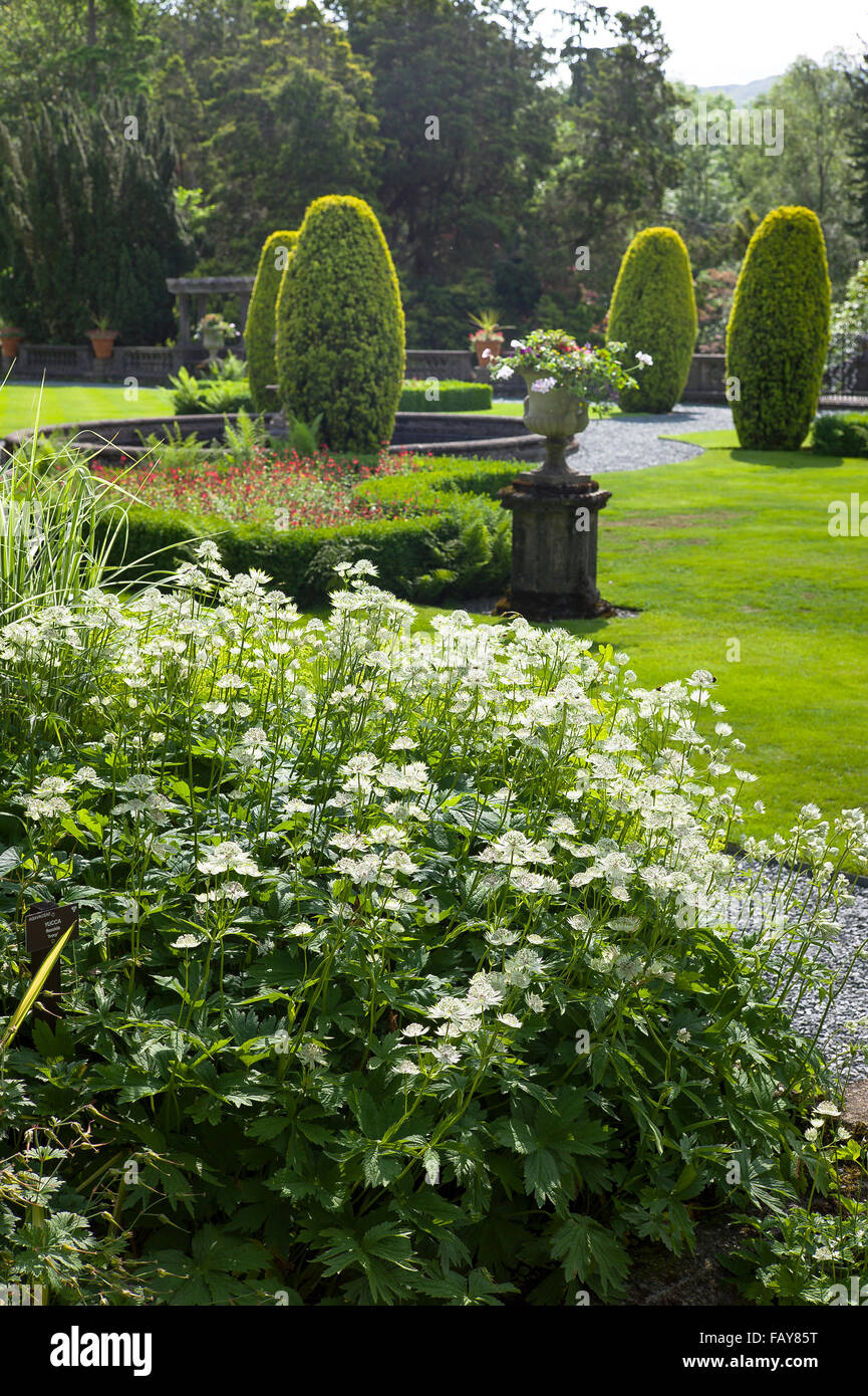 Herbaceous border with Astrantia plants at Rydal Hall Cumbria UK - Stock Image