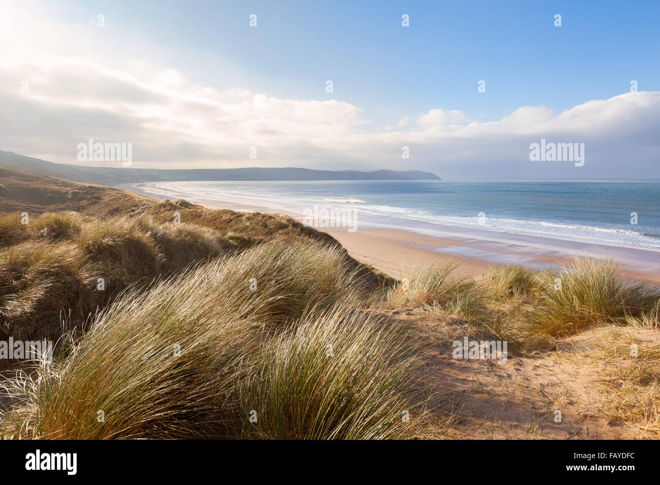 Windswept grass on the sand dunes above Woolacombe beach in North Devon, England - Stock Image