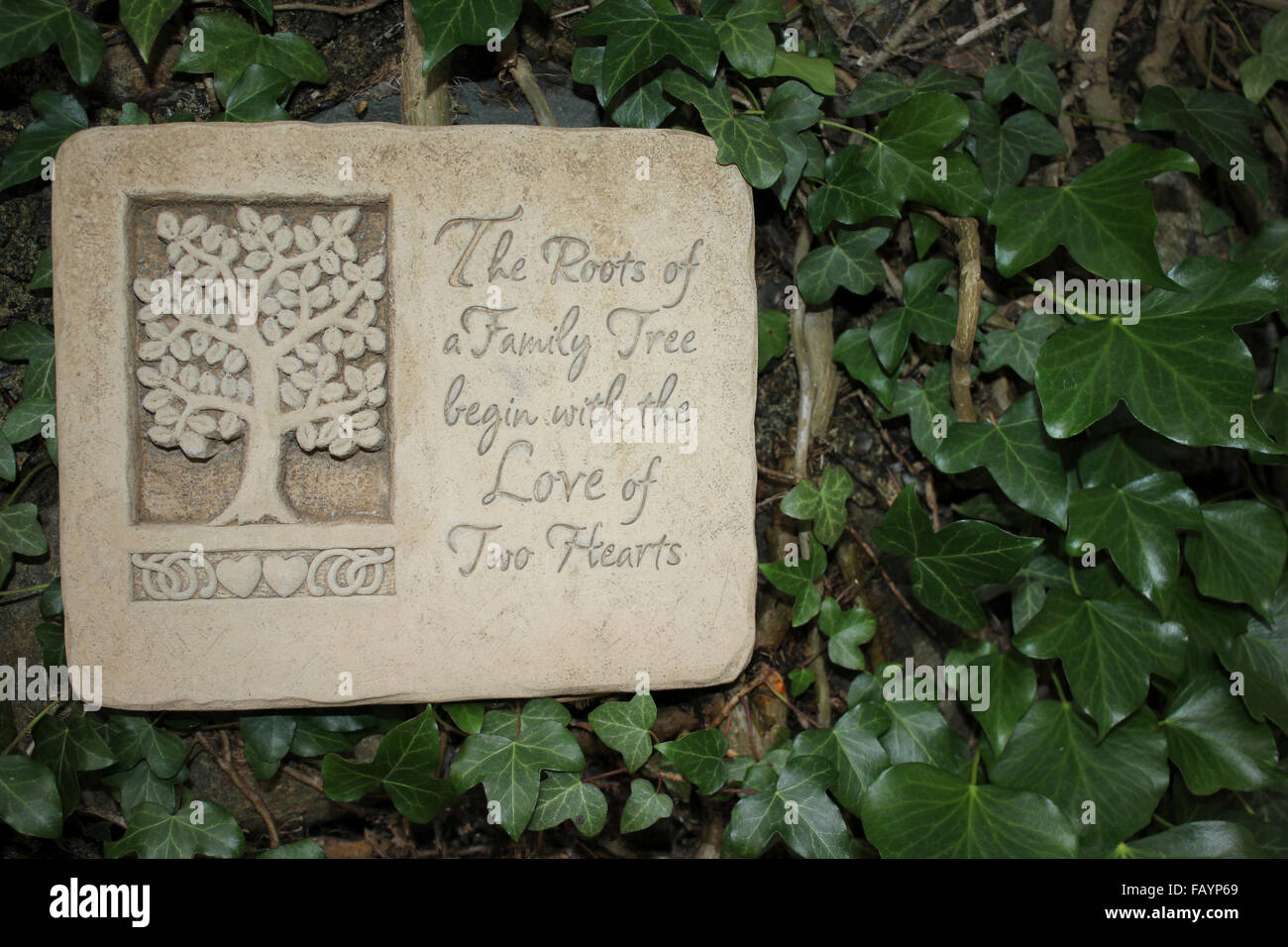 Family Tree Plaque amid Ivy Leaves - Stock Image
