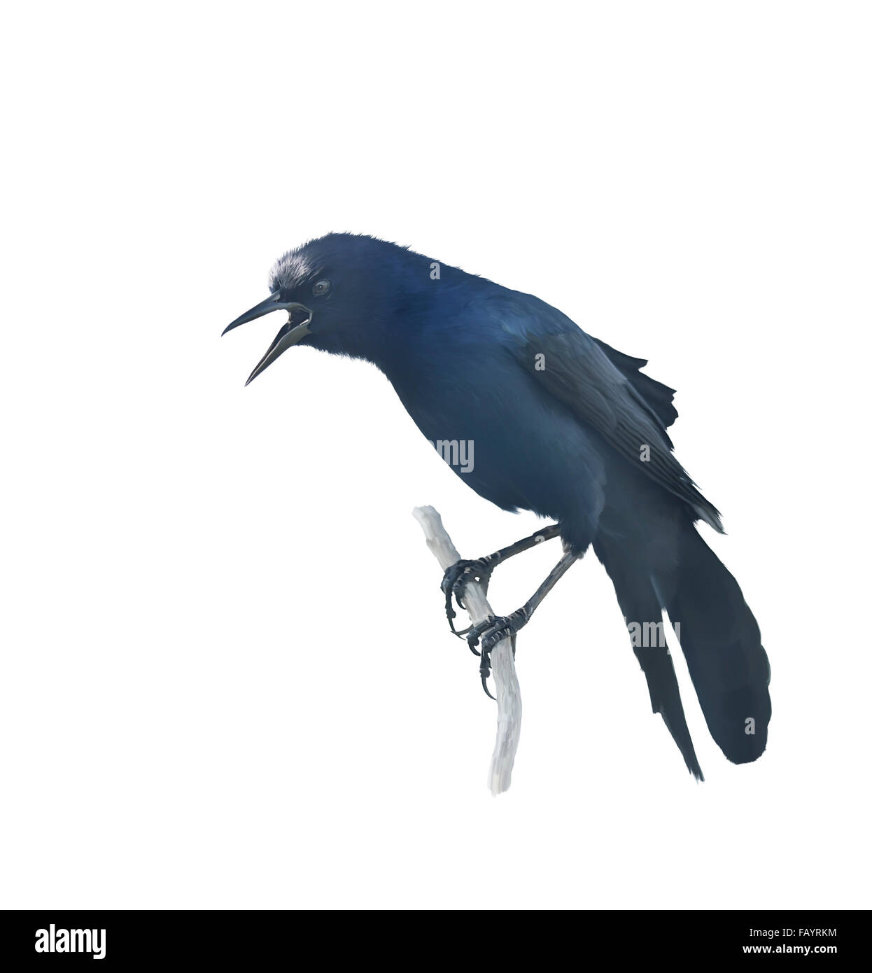 Digital Painting of Perching Blackbird - Stock Image
