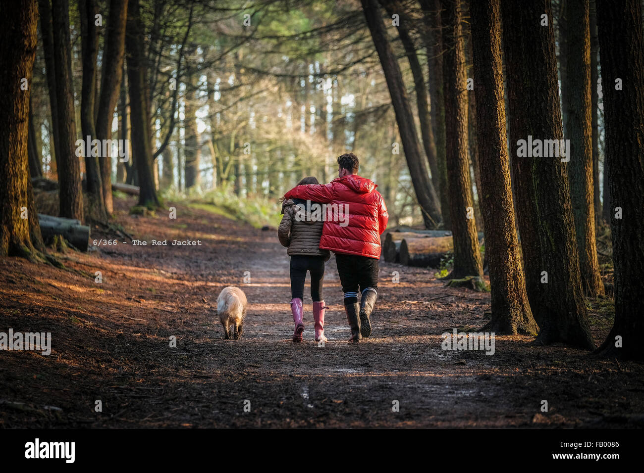 Man with arm around woman walking along woodland path with their dog - Stock Image