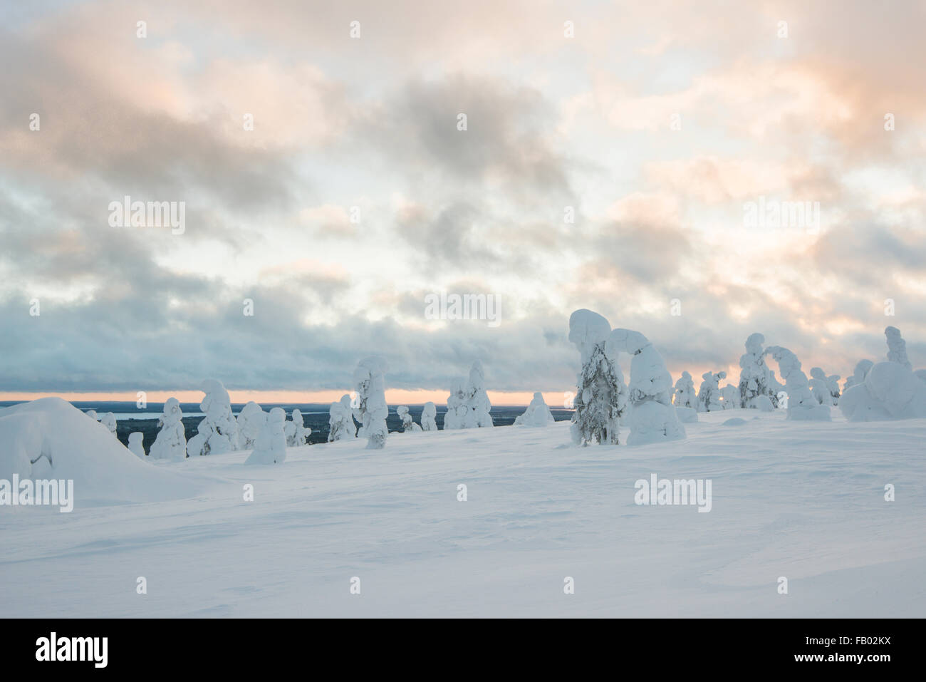 Snow-covered spruces, fjell in winter, Riisitunturi National Park, Posio, Lapland, Finland - Stock Image