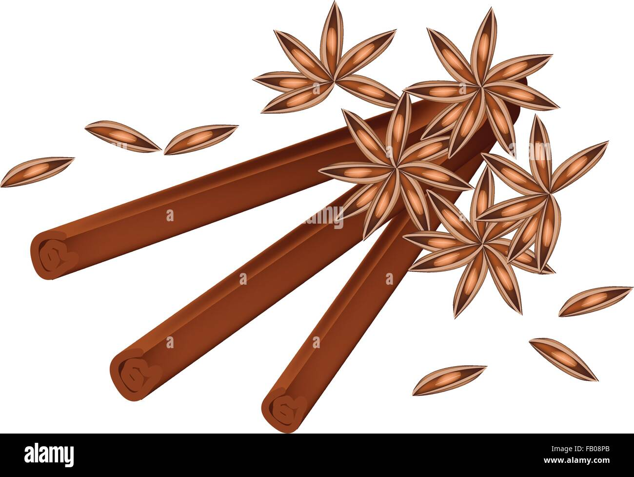 Vegetable and Herb, A Pile of Dried Star Anise, Star Aniseed or Illicium verum with Cinnamon Sticks Used for Seasoning Stock Vector