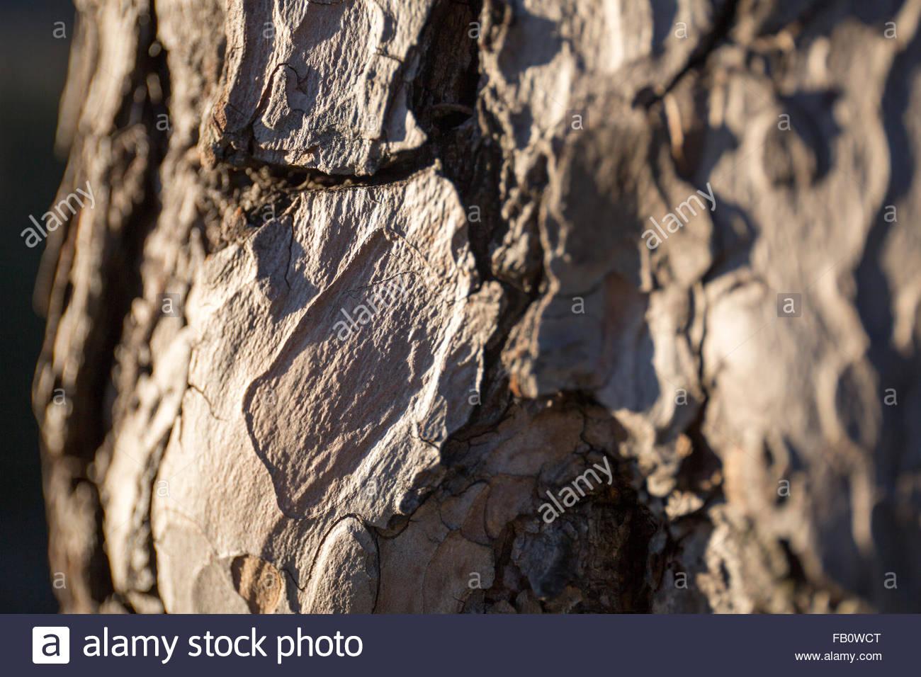 bark of a tree - Stock Image