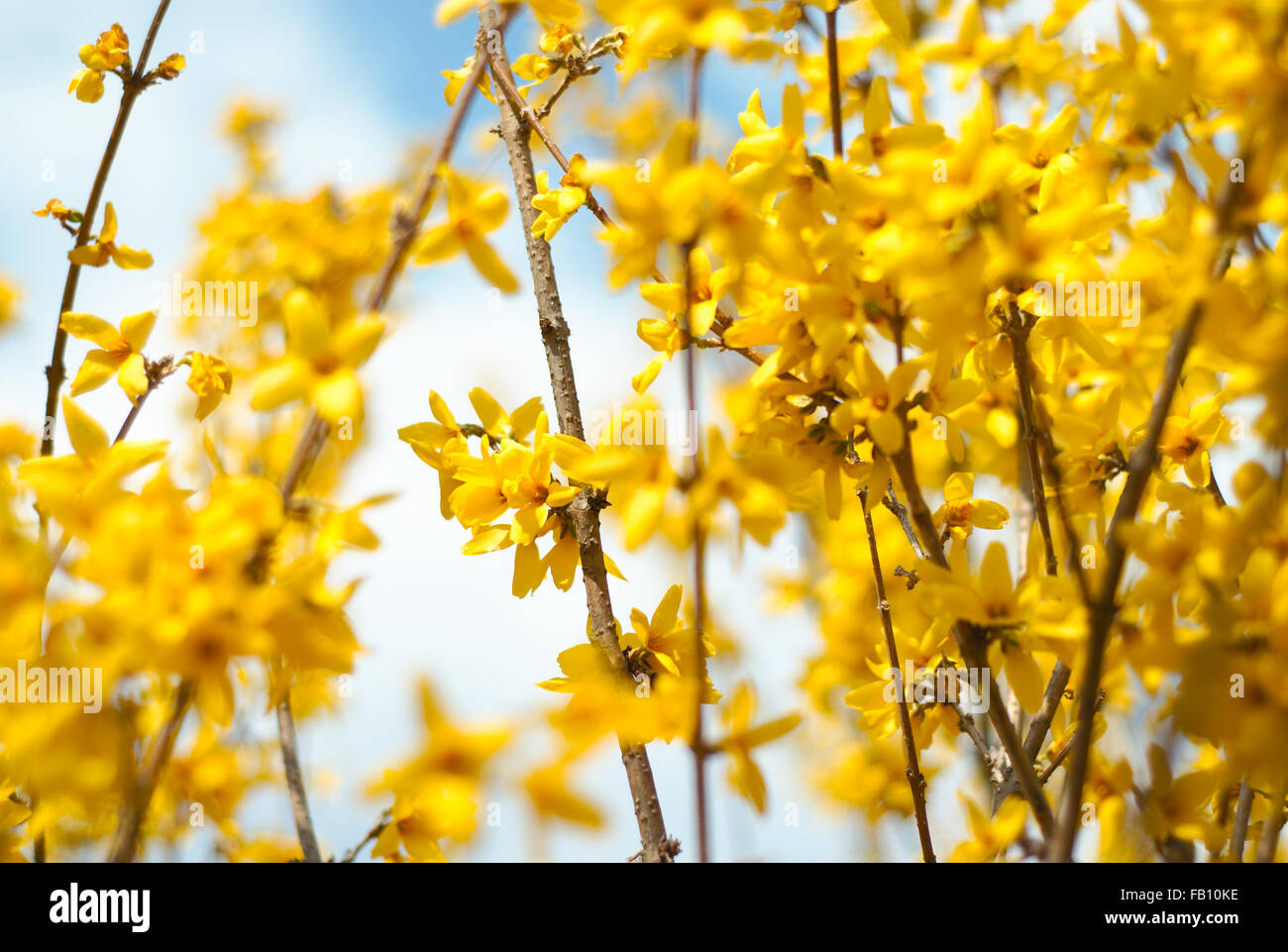 Beautiful Floral Border Yellow Flower Design For Decor Stock Photo