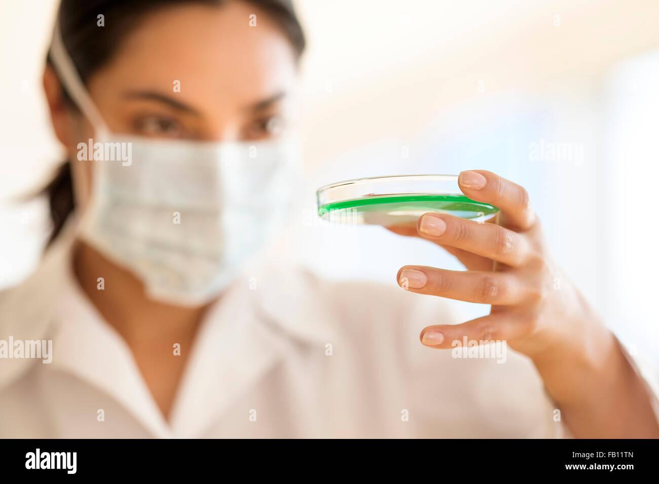 Scientist holding petri dish Stock Photo