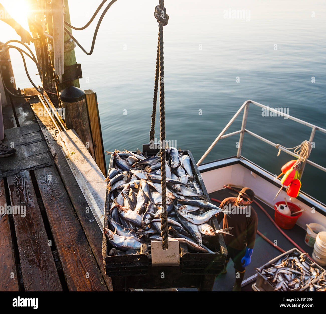 Men loading fish on boat - Stock Image