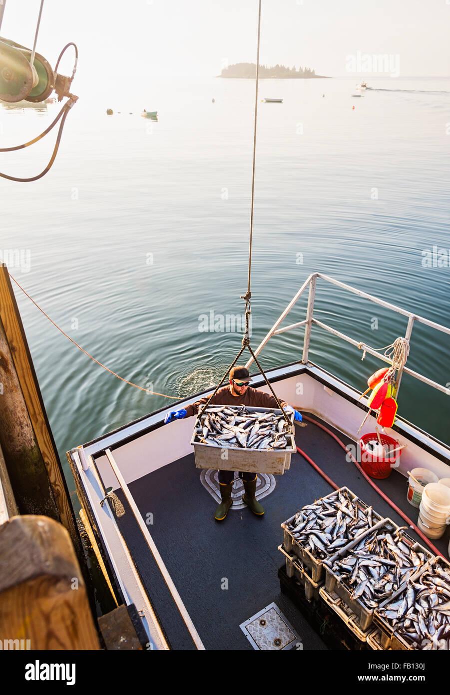 Man loading fish on boat - Stock Image