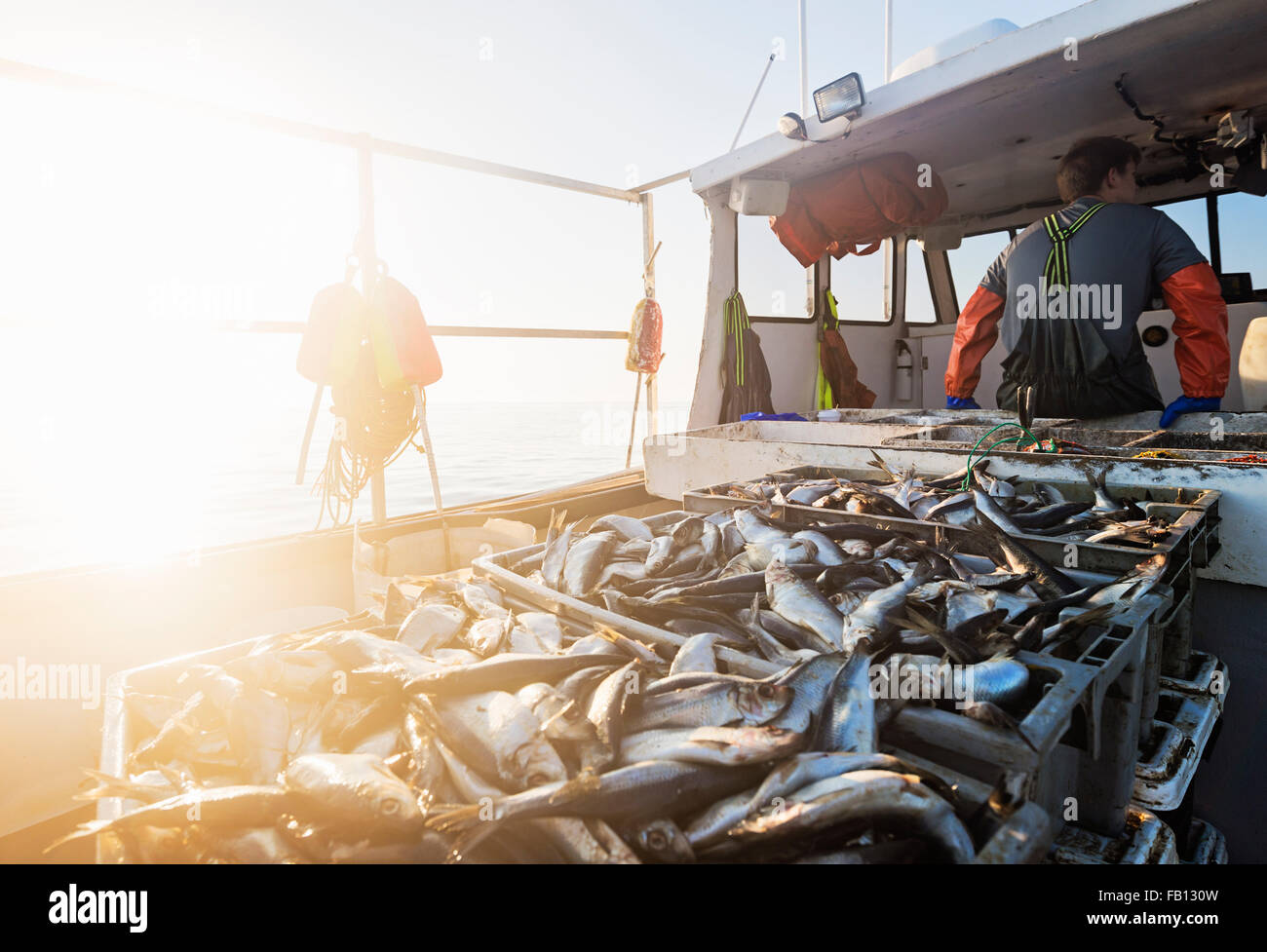 Crates of fish on boat with fisherman standing in background - Stock Image