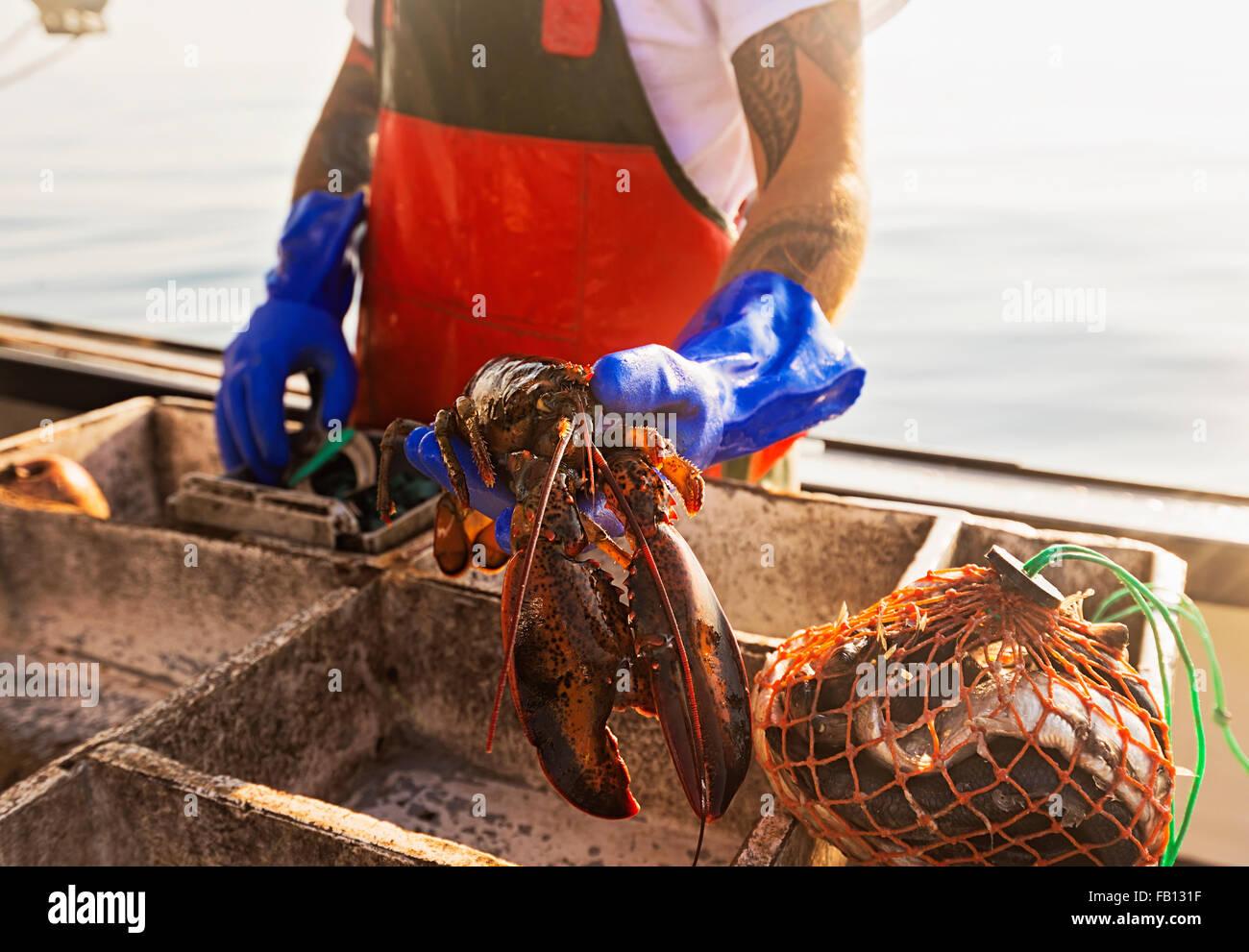 Fisherman holding lobster - Stock Image