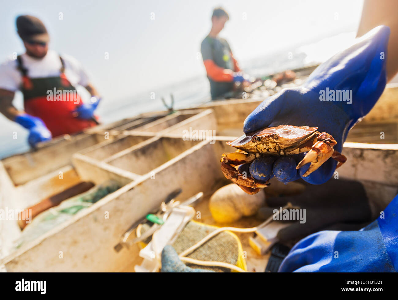 Man's hand holding crab with two fisherman working in background - Stock Image