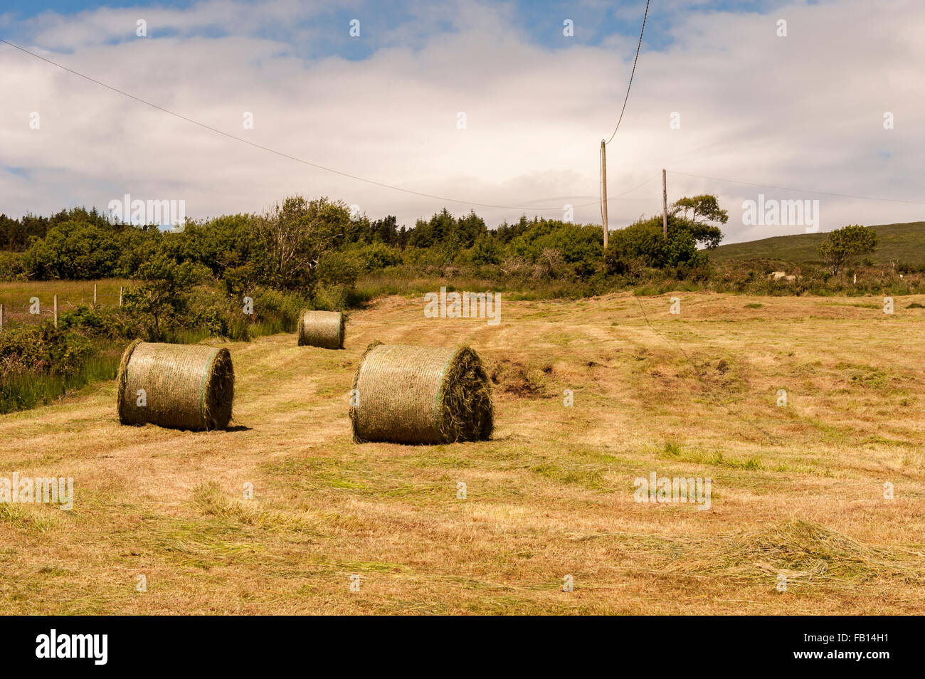 Bales of silage waiting to be wrapped in Ballydehob, West Cork, Ireland with blue sky and copy space. - Stock Image