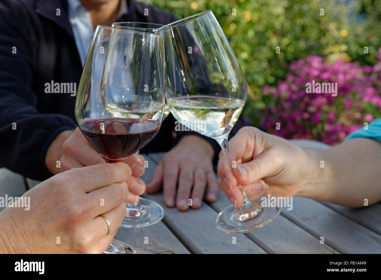 Three people clink their wine glasses, Törggelen, Eisacktal, South Tyrol, Alto Adige, Italy - Stock Image