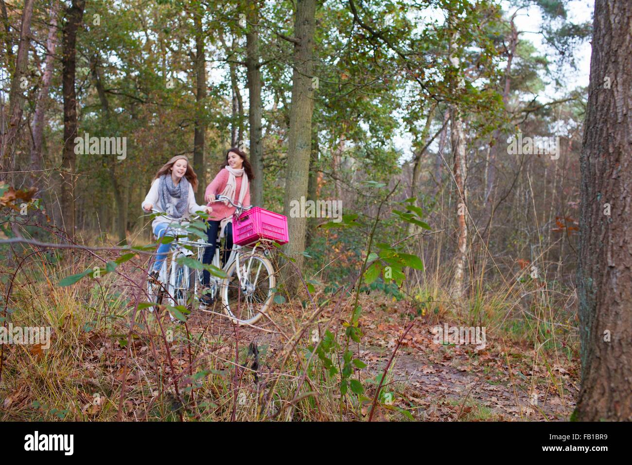 Teenage girls in forest cycling on bicycles with pink crate attached Stock Photo