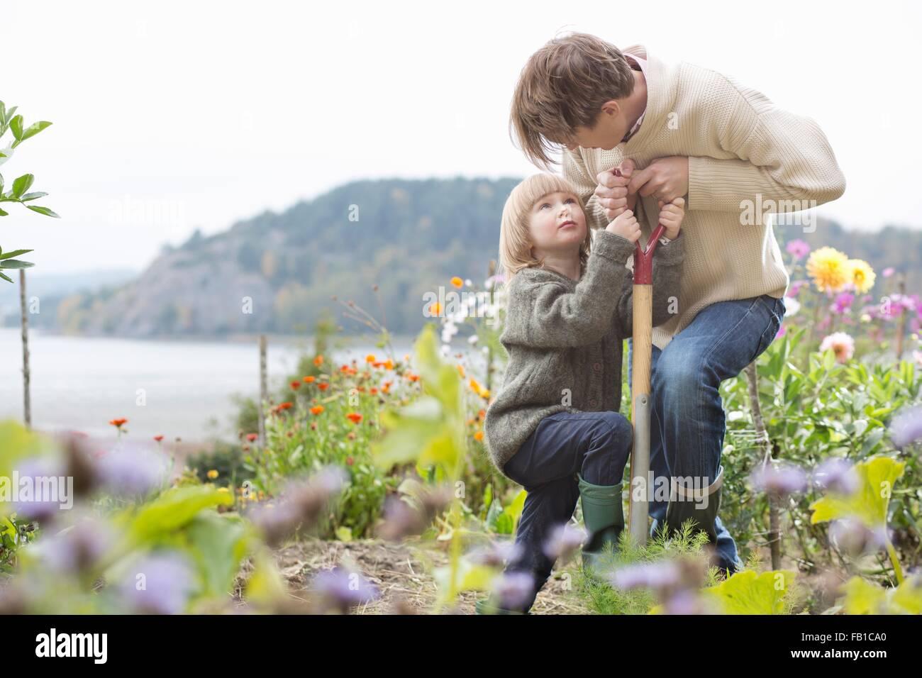 Mature man and son digging organic garden, Orust, Sweden - Stock Image