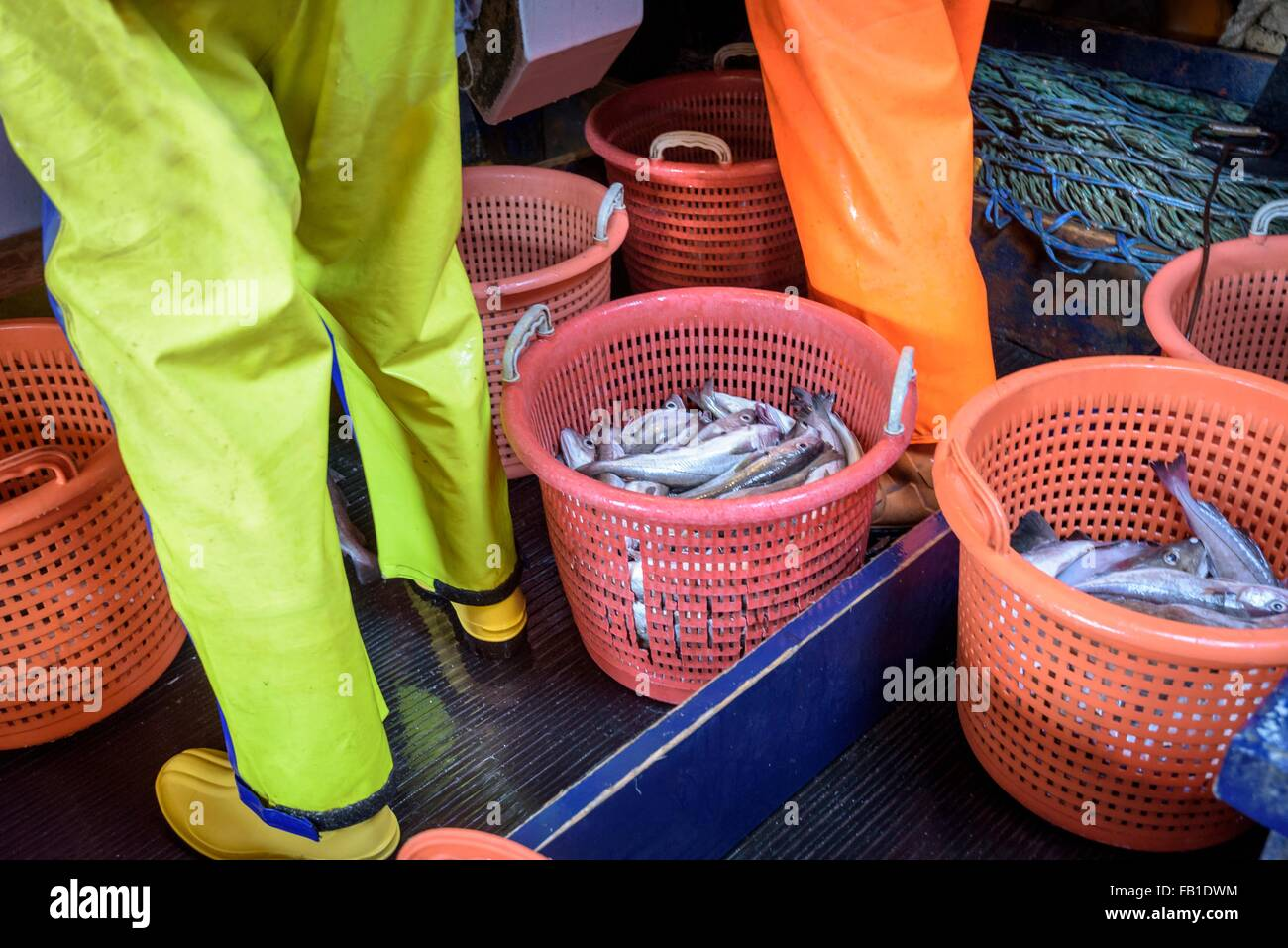 Basket of sorted fresh fish on trawler, low section of fishermen - Stock Image