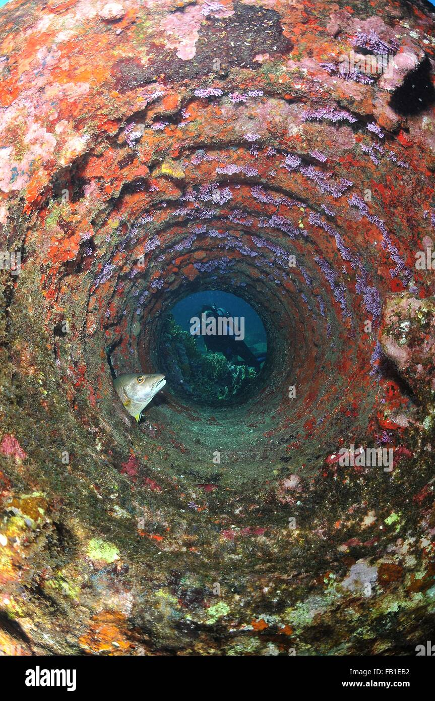 Scuba diving looking through tube in wreckage at resting snapper fish, Chinchorro Atoll, Quintana Roo, Mexico - Stock Image