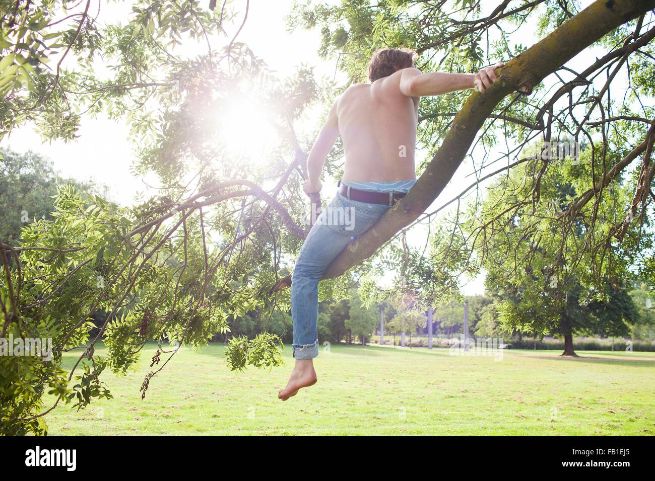 Rear view of young man looking out from tree in park - Stock Image