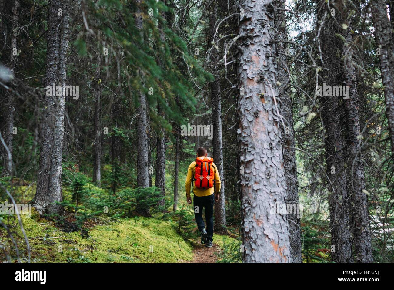 Rear view of mid adult man carrying orange backpack trekking through forest, Moraine lake, Banff National Park, - Stock Image