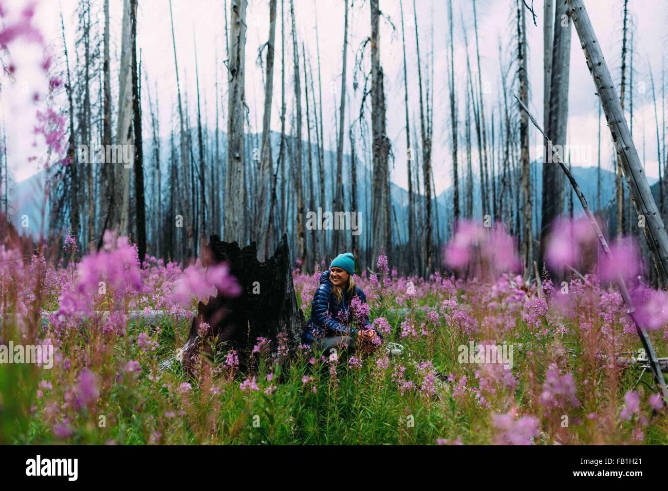 Mid adult woman sitting burnt tree stump field wildflowers away smiling Moraine lake Banff National Park Alberta - Stock Image