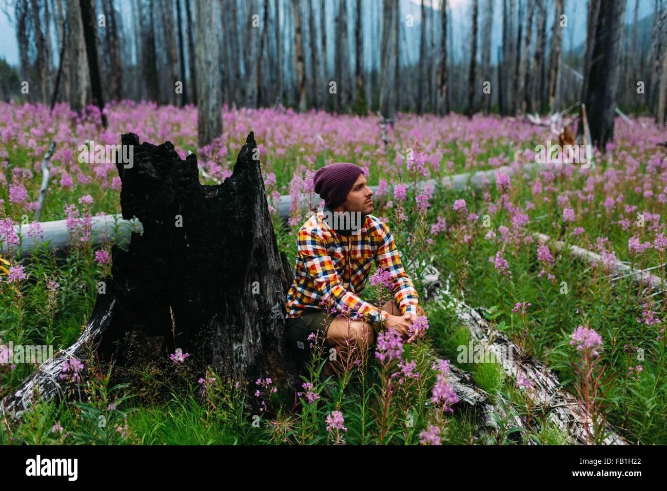 Mid adult man sitting burnt tree stump field wildflowers away Moraine lake Banff National Park Alberta Canada - Stock Image