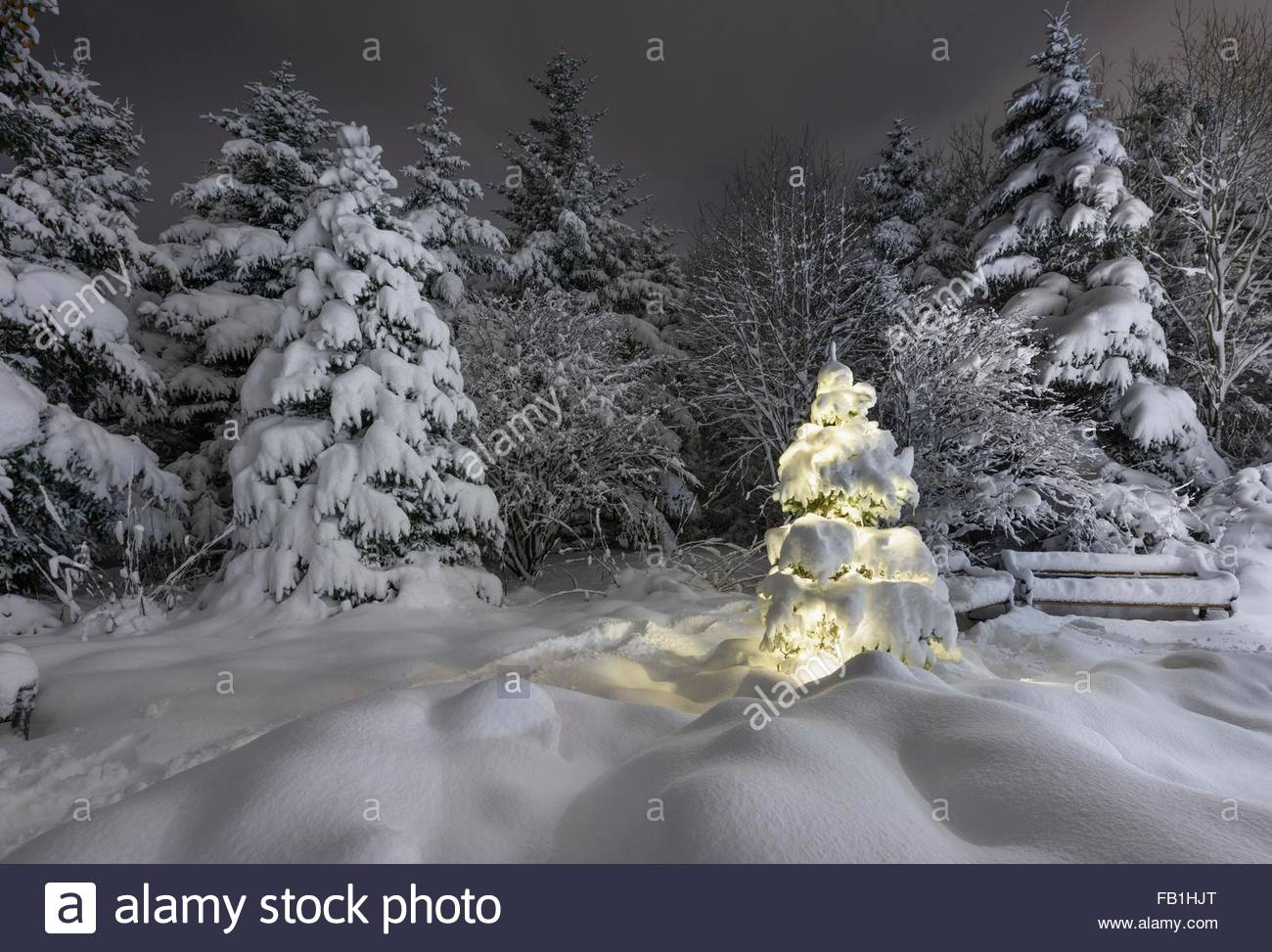 illuminated snow covered christmas tree in forest in botanical gardens reykjavik iceland stock
