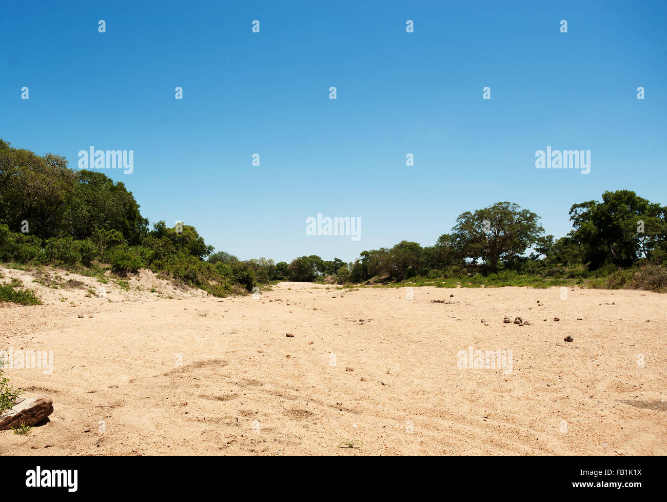 A dry riverbed in Kruger National Park.  The area has been declared a disaster area due to severe drought in South - Stock Image