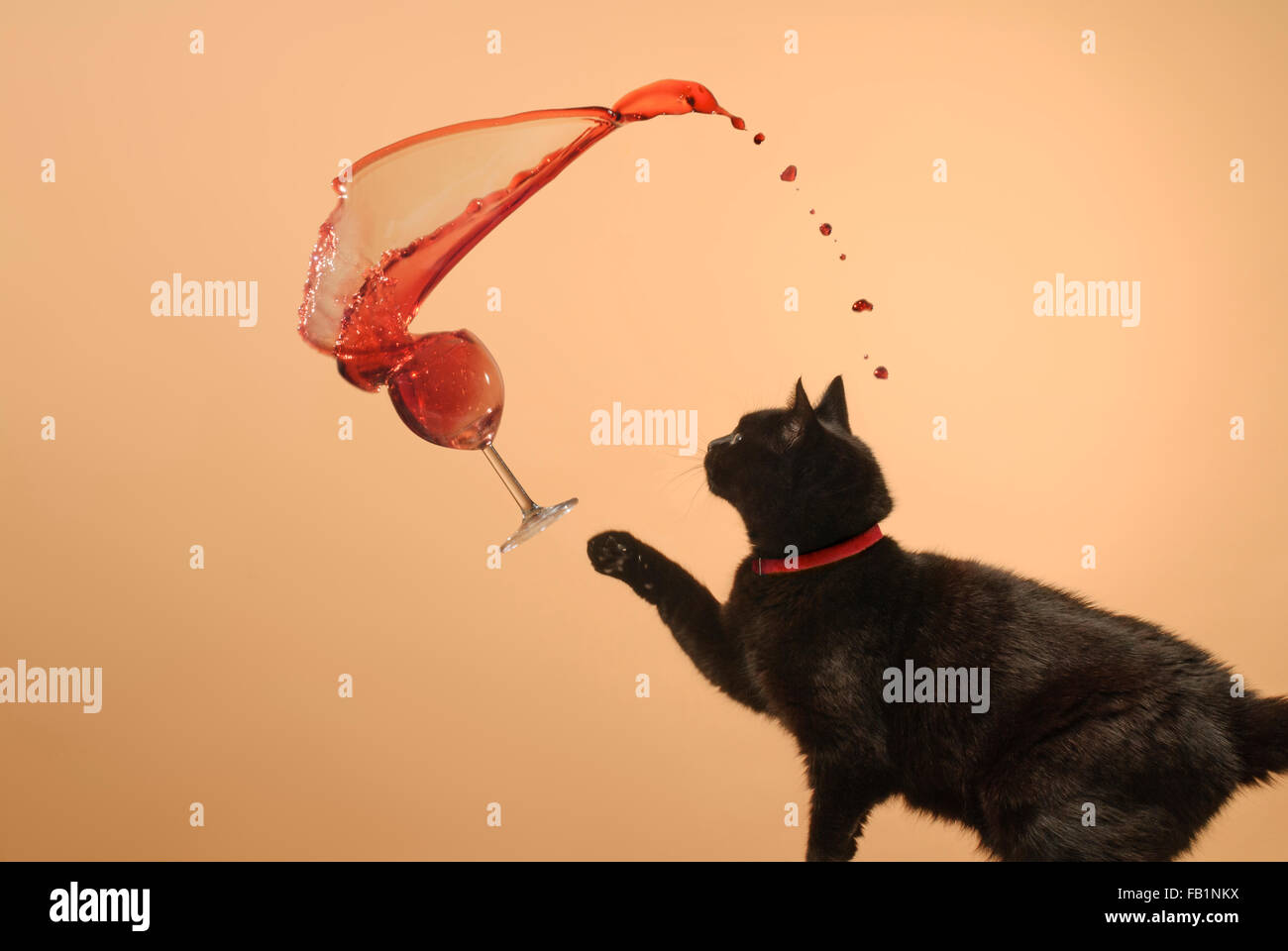 Black cat spilling a glass of wine Stock Photo
