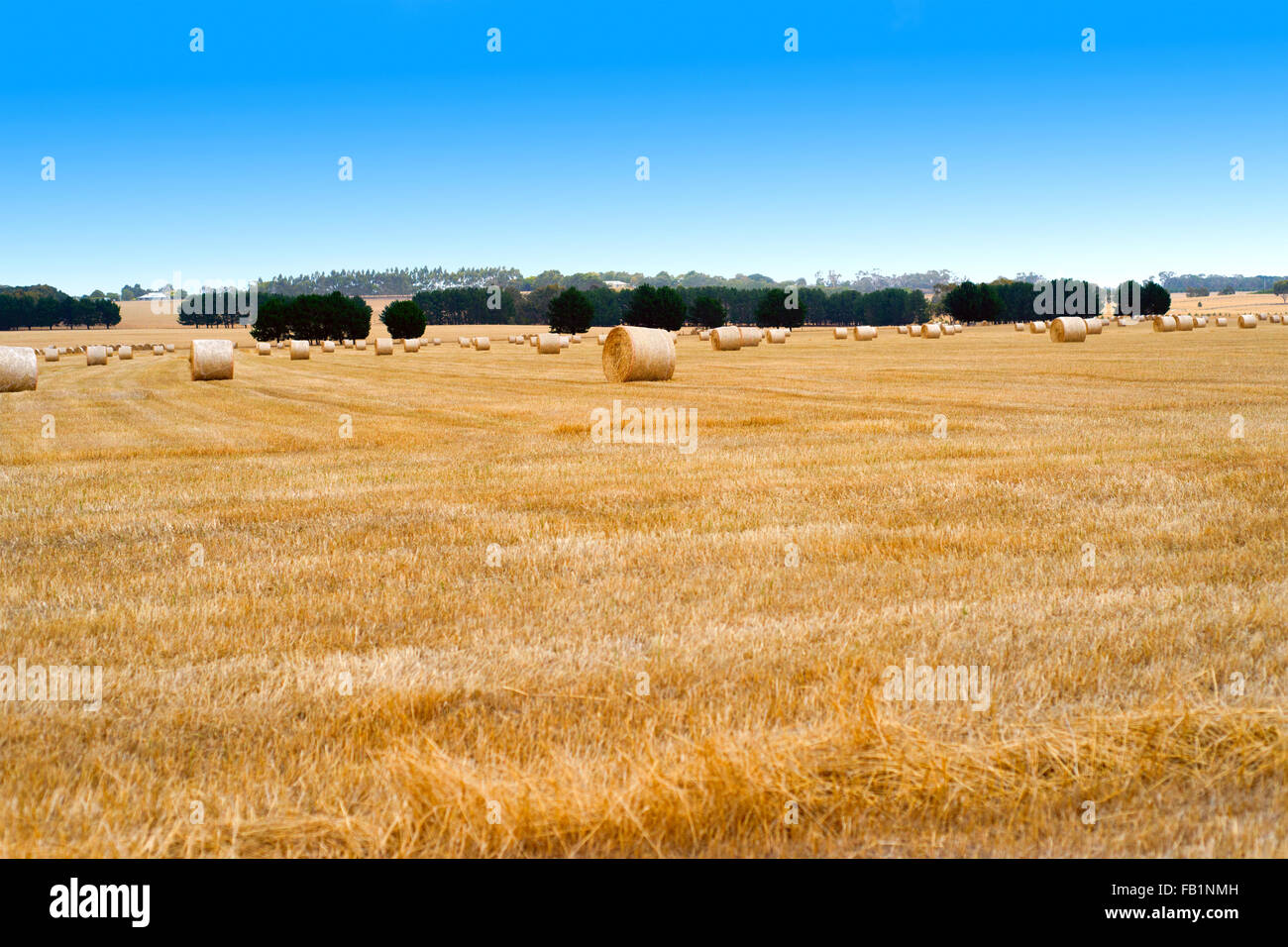 Countryside landscape with golden bales of hay, Australia. - Stock Image