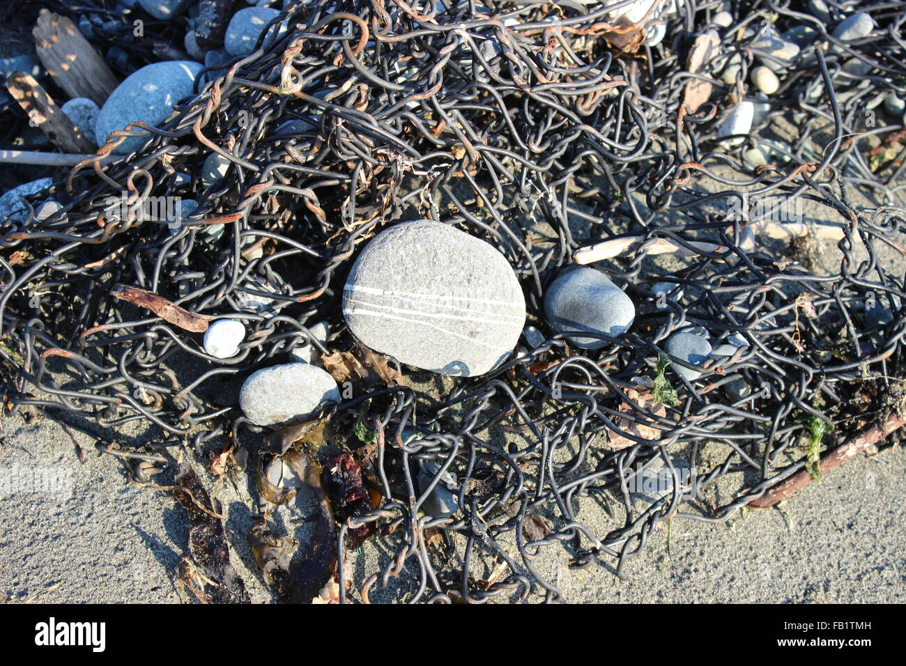 Beach combing Finds Stock Photo