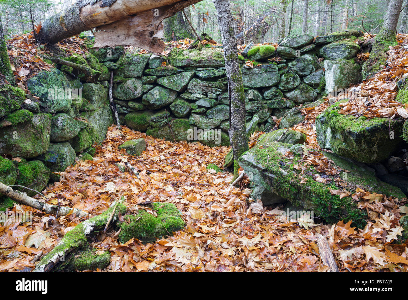 The stone work of an abandoned cellar hole along the old North and South Road (now Long Pond Road) in Benton New H&shire. & The stone work of an abandoned cellar hole along the old North and ...
