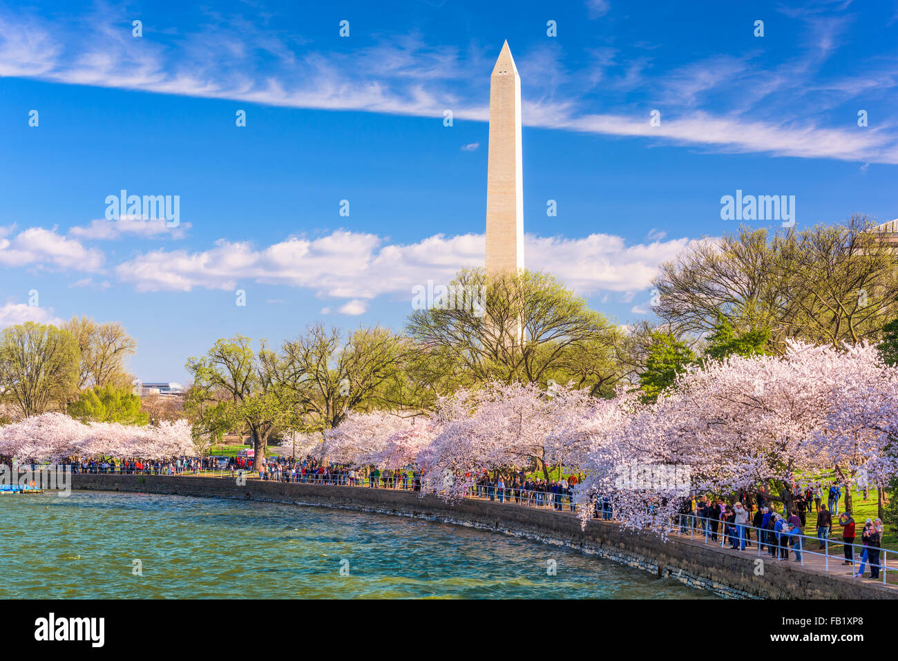 WASHINGTON DC - APRIL 10, 2015: Crowds walk below cherry trees and the Washington Monument during the spring festival. - Stock Image